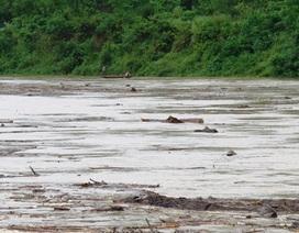 Đắm thuyền trên sông Lam, một người mất tích