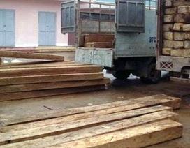 Bắt gỗ lậu chủ yếu khai thác ở khu bảo tồn thiên nhiên