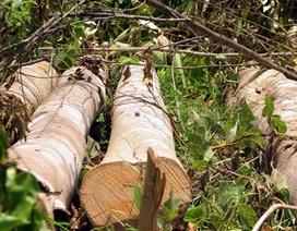 """Hàng trăm người """"rầm rập"""" phá rừng, chiếm đất lâm nghiệp"""