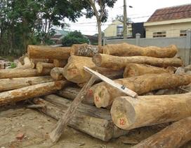 Một tháng bắt hơn 60m3 gỗ lậu