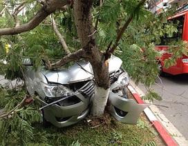"""Hà Nội: Ô tô lao lên dải phân cách """"hạ gục"""" 1 cây phượng"""
