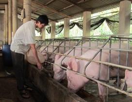 Tăng giới hạn tồn dư chất cấm trong chăn nuôi: Dư luận đang hiểu nhầm!