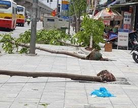 Hàng trăm cây xanh đổ ở Hà Nội do chăm sóc chưa đúng kỹ thuật?