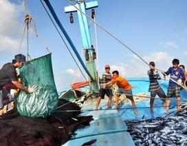 """3 """"điểm đen"""" không nên khai thác hải sản tại vùng biển ô nhiễm"""