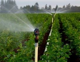 Mô hình tưới tiết kiệm trên vùng đất thường xuyên khô hạn