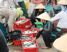 Vì sao hải sản ở tầng nổi an toàn?