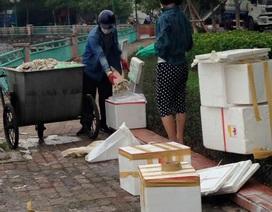 Điều tra hình ảnh đôi nam nữ lấy cá chết Hồ Tây cho vào hộp xốp