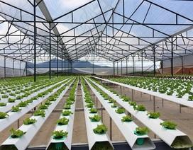 FDI vào nông nghiệp Việt Nam còn hạn chế