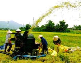 """Những pha """"lội ngược dòng"""" của ngành nông nghiệp năm 2016"""