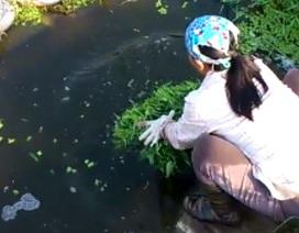 Hà Nội: Rau muống mơn mởn trên nước cực kỳ ô nhiễm