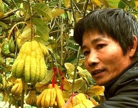 Cận cảnh vườn phật thủ giá bạc tỷ tại Hà Nội