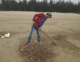 Nghêu sò chết chất dày 10cm trên bờ biển