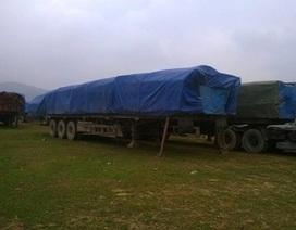 Tiếp tục bắt giữ 20 xe gỗ vi phạm tải trọng