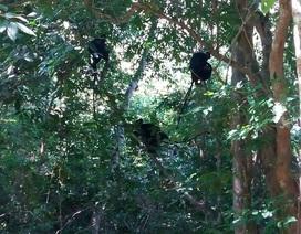 Thả 5 cá thể Voọc bị bẫy bán về với môi trường tự nhiên