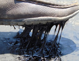Nắng thiêu đốt làm chảy nhựa mặt đường