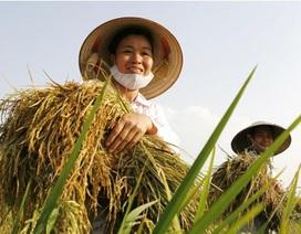 Xây dựng trung tâm sản xuất lúa giống cung ứng cho các tỉnh, thành