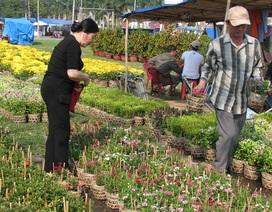 Mai, quất vắng người mua, hoa rẻ tiền hút khách