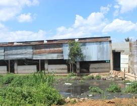 Người dân lao đao vì mùi hôi thối từ các cơ sở chăn nuôi