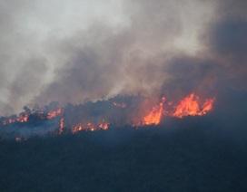 Đà Nẵng cảnh báo nguy cơ cháy rừng cao