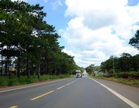 Trồng 24.000 cây thông dọc Quốc lộ 14