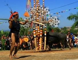 Lễ hội đua voi ở Buôn Đôn sẽ không tiến hành nghi thức đâm trâu