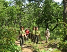 Đắk Lắk muốn dừng dự án thủy điện trong Vườn quốc gia Yok Đôn