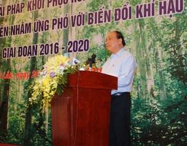 Thủ tướng chỉ đạo khôi phục rừng bền vững vùng Tây Nguyên