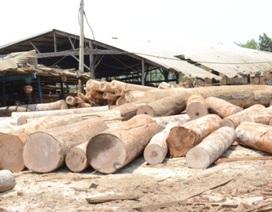 Kỷ luật 5 cán bộ kiểm lâm buông lỏng trách nhiệm bảo vệ rừng