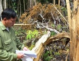 Khởi tố đối tượng cầm đầu băng nhóm phá rừng mang theo hung khí