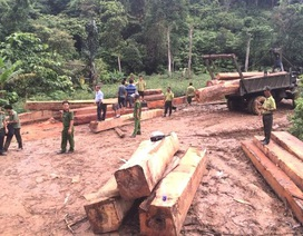 Bắt giữ 4 đối tượng vận chuyển hàng chục khối gỗ lậu