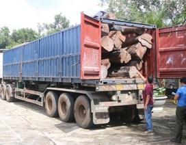 Tạm giữ container chở 17 m3 gỗ căm xe để điều tra