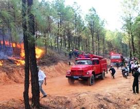 Chập điện xe nâng gỗ, 5 ha rừng thông bị thiêu rụi