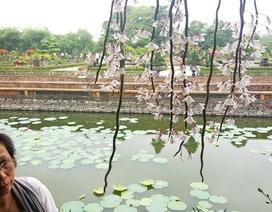 Ngỡ ngàng với phong lan đẹp tuyệt tại vườn thượng uyển Cơ Hạ