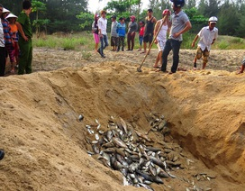 Huế thành lập hội đồng đánh giá thiệt hại sự cố môi trường biển