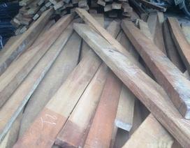 Phát hiện lượng lớn gỗ lậu tại xưởng cưa của em trai chủ tịch xã