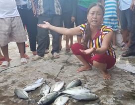 Ngư dân điêu đứng khi hàng chục tấn cá lồng chết đột ngột