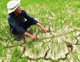 Hạn hán, ngập mặn khiến nông nghiệp tăng trưởng âm