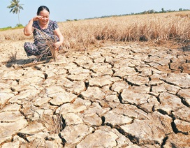 """Ngành nông nghiệp """"kéo tụt"""" tăng trưởng GDP 9 tháng xuống còn 5,93%"""