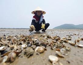Mỗi năm, Việt Nam có thể thiệt hại 5% GDP vì ô nhiễm môi trường