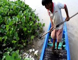 """""""Giải mã"""" hiện tượng cá chết hàng loạt ở thượng nguồn sông Sài Gòn"""