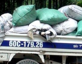 Bắt quả tang xe chở rác thải lén đổ vào rừng tràm