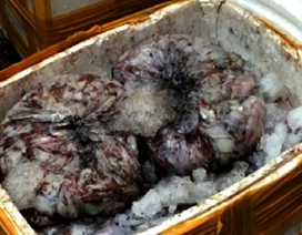 """Hơn 1 tấn cá, mực bốc mùi """"suýt"""" lên bàn ăn"""