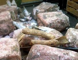 Giấu nửa tấn ngà voi trong những khối đá nhân tạo