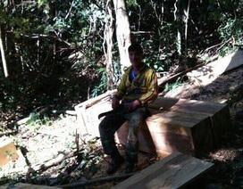 Kết luận vụ phá rừng rồi khoe trên mạng xã hội