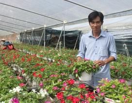 Chàng trai 8x kiếm 1,5 tỷ đồng mỗi năm từ những chậu hoa treo