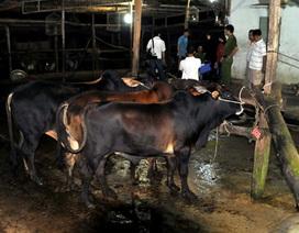 Liên tiếp phát hiện các vụ thực phẩm bẩn tại Gia Lai