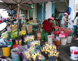 Hoa mất mùa giá cao, tiểu thương lo không đủ hàng để bán