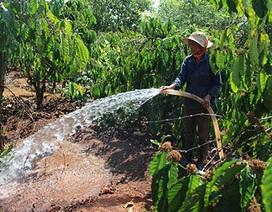 Nông dân vất vả chờ nước tưới cà phê ngày Tết
