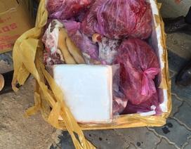 Bắt 170kg thịt chảy nước nghi heo nái giả thịt dê