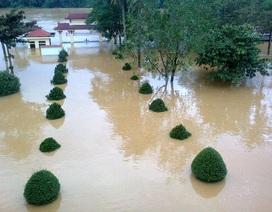 """Hàng trăm trường học Hà Tĩnh, Quảng Bình: """"Vườn không nhà trống"""" tránh lũ"""